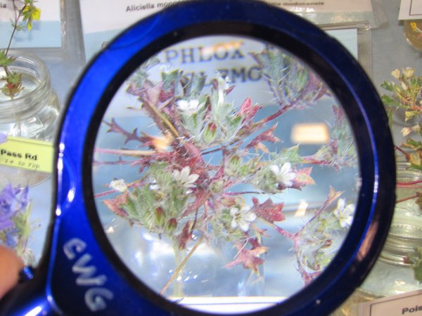 flowers magnified